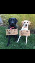 Labs matter